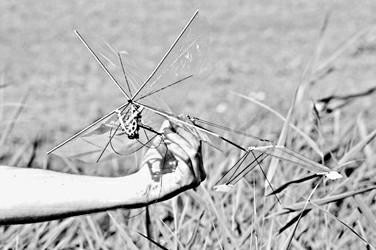 机械蜻蜓可以救灾反恐